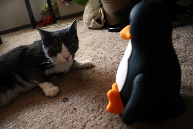 Linux contre un chat