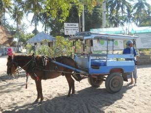 Un cidomo, autrement les taxis des îles