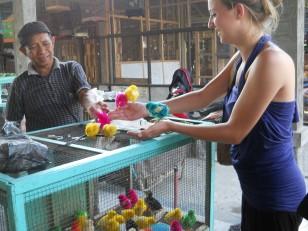 Jogjakarta : Des poussins multicolores