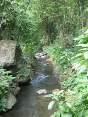 Munduk : Nous longeons tout d'abord la rivière