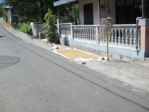Du tabac en train de sécher sur le bord de la chaussée