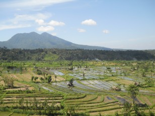 Sur la route, le paysage est magnifique avec des rizières qui comptent parmi les plus belles de Bali