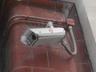 Une caméra anti-pigeons !