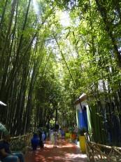 Marrakech : Le jardin Majorelle dans le quartier de Guéliz