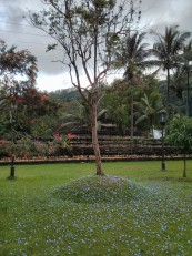 Kandy : Autour du temple de la Dent