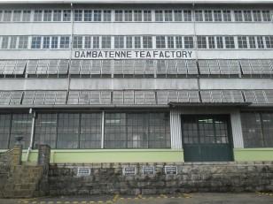 Haputale : La Dambatenne Tea Factory
