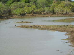 Le parc de Yala : Ses crocodiles…