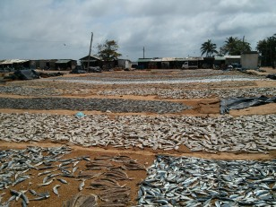 Negombo : Le Fish Market