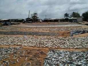 Negombo : Le Fish Market
