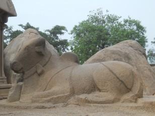 Mahabalipuram : Le nandi (taureau) de Shiva