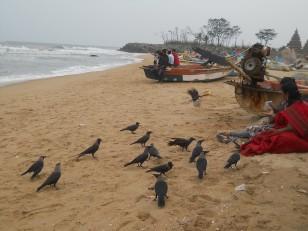 Mahabalipuram : La plage et ses corbeaux