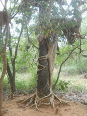 Auroville : Sur le chemin du Matrimandir