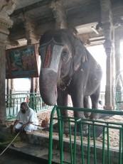 Tiruchirapally : Là aussi, il est possible de se faire bénir par un éléphant