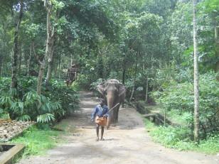 Kumily : Notre guide avec notre éléphant