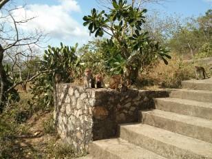Dambulla : Des singes, le long du chemin qui mène aux grottes