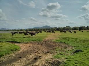 Minneriya : Le parc national