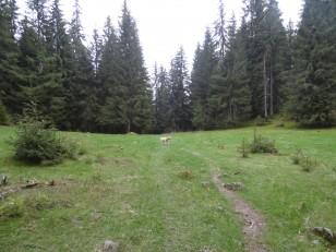 Monts Apuseni: Il est possible defaire de longues randonnées, àtravers les forêts, les gorges, les grottes…