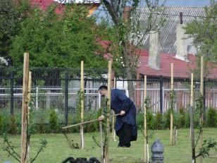 Tazlău: Un moine en train de jardiner