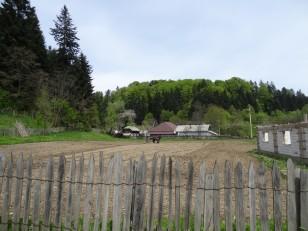 Tazlău: Cette randonnée nous donne l'occasion de voir un homme labourer son champ à l'ancienne…
