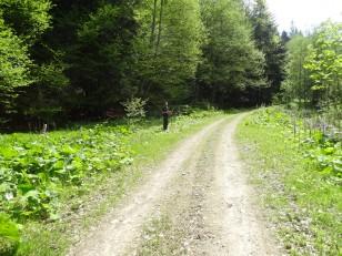 Tazlău: De nous balader dans la forêt…