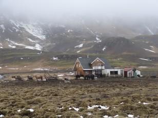 Le Sud de l'Islande : Des chevaux islandais