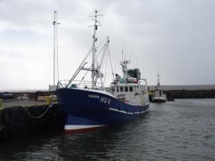 Le Nord de l'Islande : Hvammstangi
