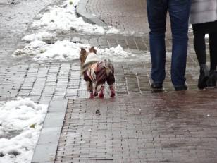 Moscou: Un chien russe